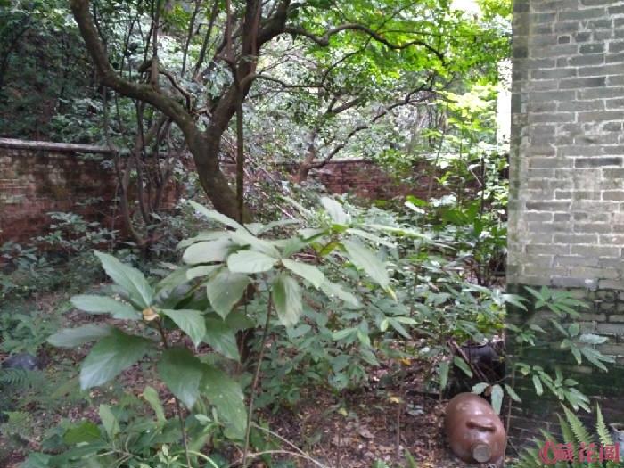 后园也是长得密密麻麻的