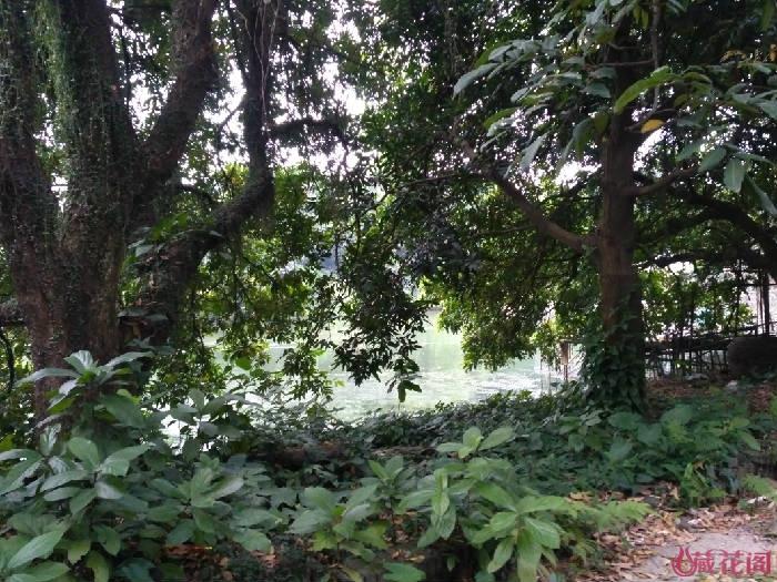 大树后面是池塘