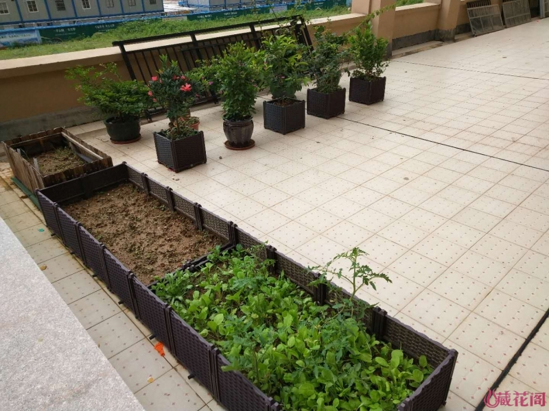 左边露台主要种花