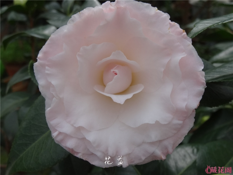 DSC04202.jpg