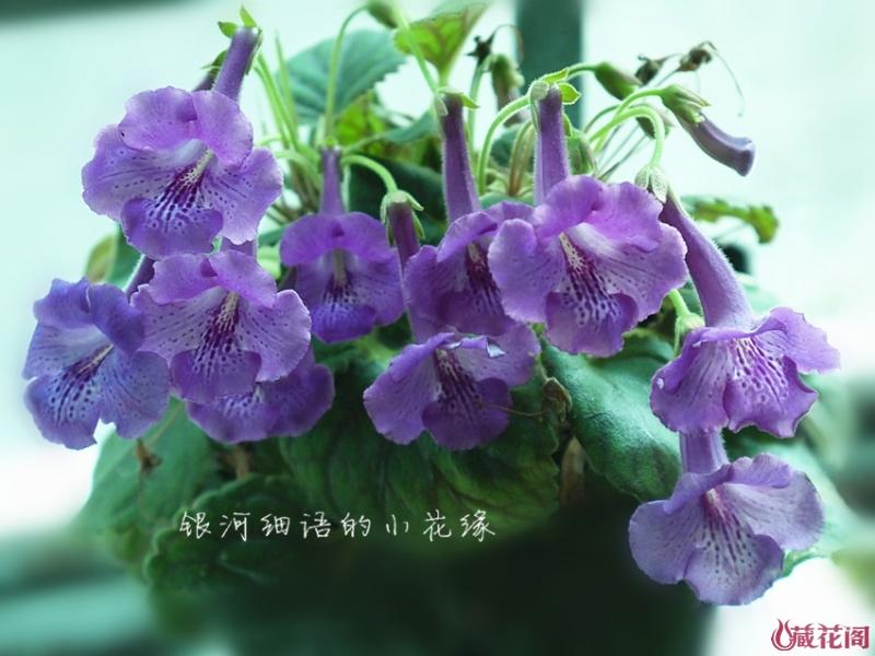 P1000464_副本.jpg