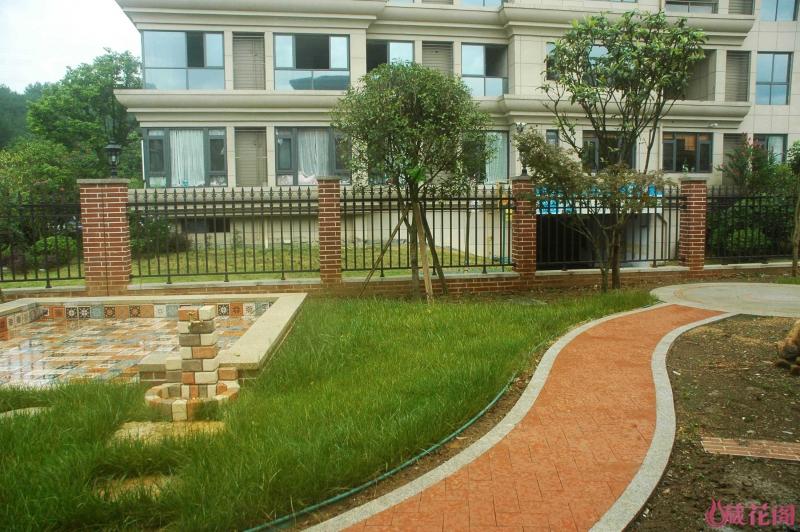 草坪1.jpg