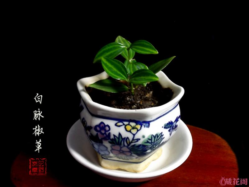DSCF5003.png
